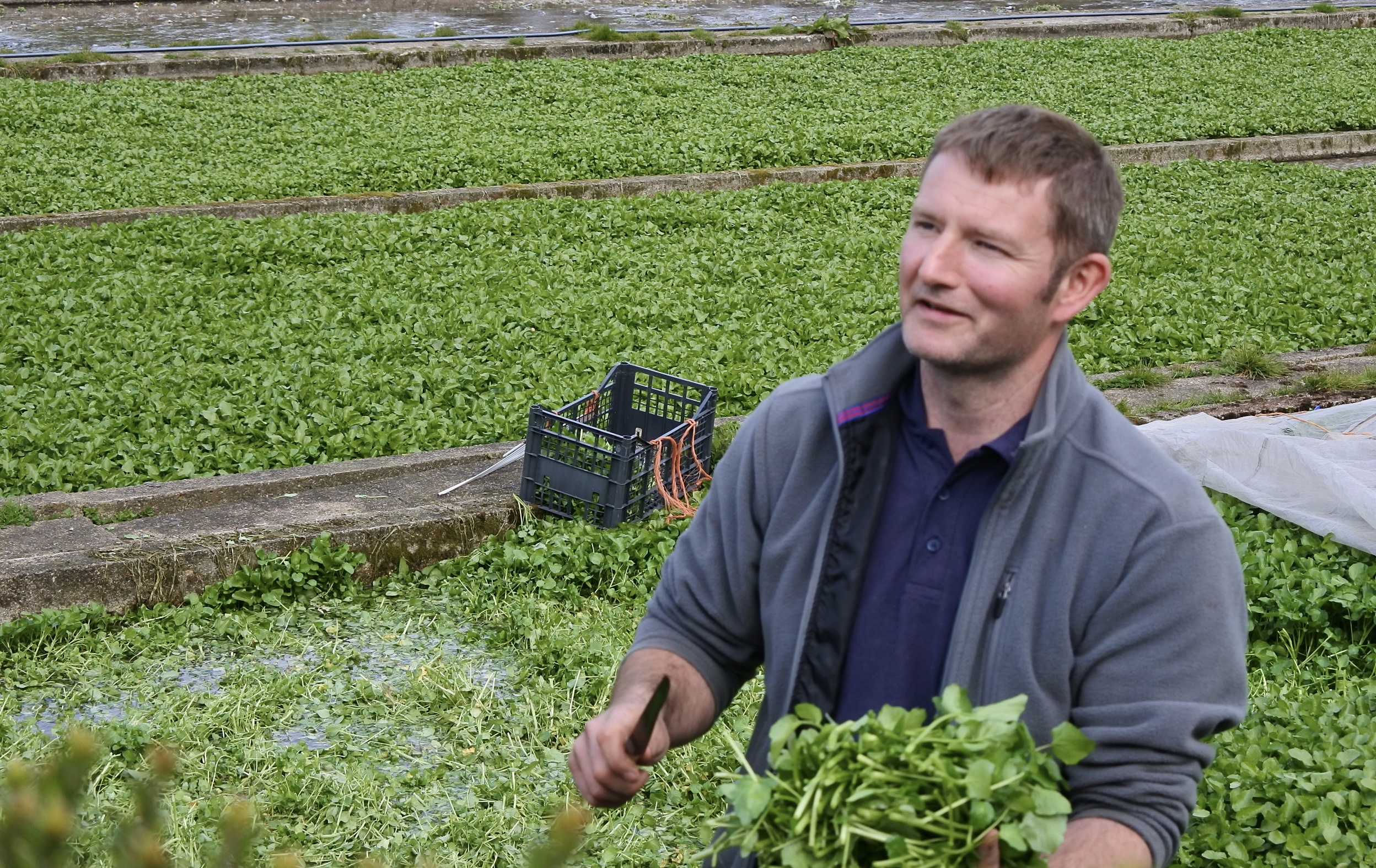 Tylers Watercress